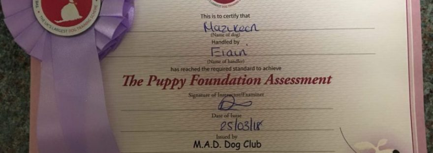 The Puppy Foundation Assessment Certificate